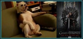 Générique de Game of Thrones revu par un chien !