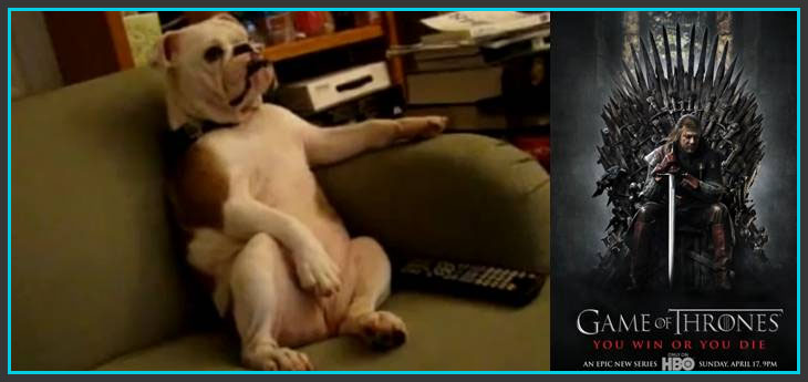 chien-game-of-thrones